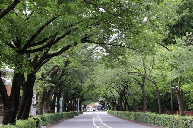 武蔵野エリアに住みたいと言われる理由